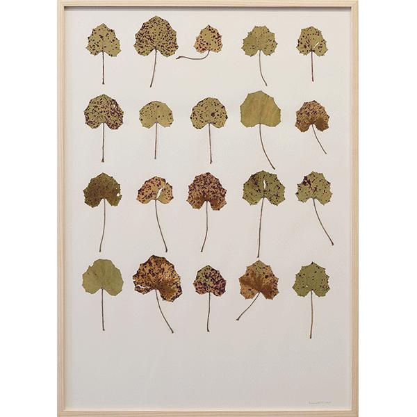 herman de vries<br/>tusilago farfano, 2004, leafs on paper, 72 x 52 cm