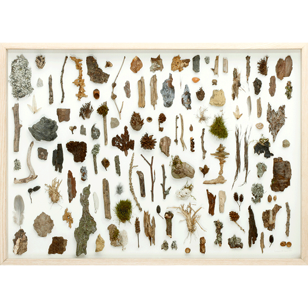 herman de vries<br/>from the forest floor, 2010, found natural objects, 50 x 70 cm