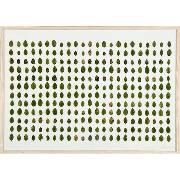 herman de vries<br/>vaccinium (collected hirschdelle), 2011, natural preserved leafs, 41 x 63 cm