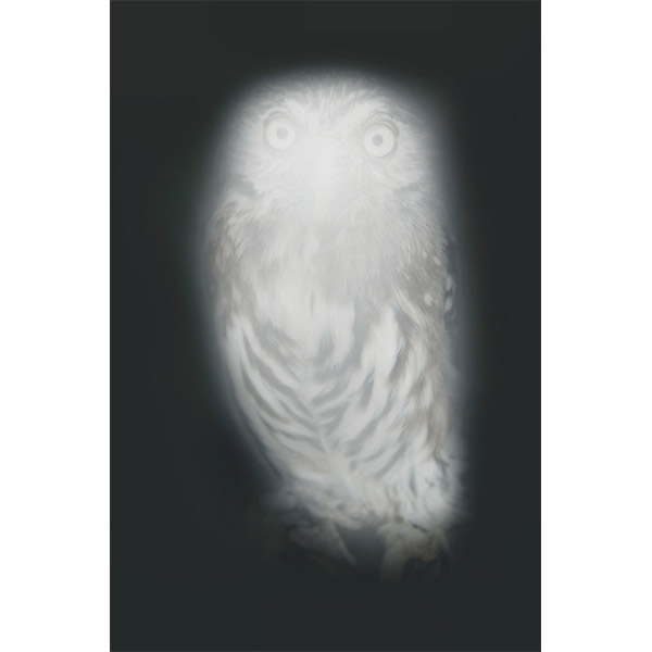 ANNA VOGEL<br/>Smiling Barn Owl III, 2013, pigment print, 44 x 33cm