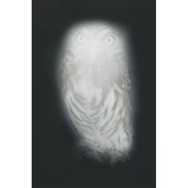ANNA VOGEL<br/>Smiling Barn Owl III, 2013, pigment print, 44 x 33cm