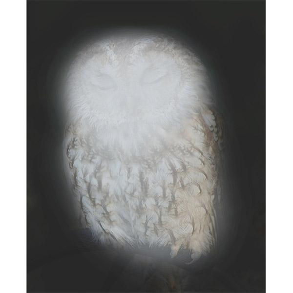 ANNA VOGEL<br/>Smiling Barn Owl I, 2013, pigment print, 44 x 33cm