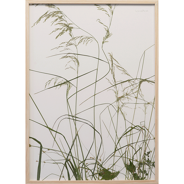 herman de vries<br/>kleines rasenstück, 2016, plants on paper, 72 x 52 cm