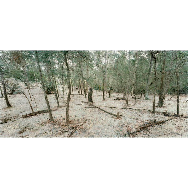 ROSEMARY LAING<br/>The Paper: Monday, 2014, hand-printed, hand-coloured photograph, 284,5 × 551,2 cm, ed. of 8