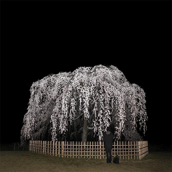 SASCHA WEIDNER<br/>Nightcall II, 2013, pigment print 70 x 70 cm, framed