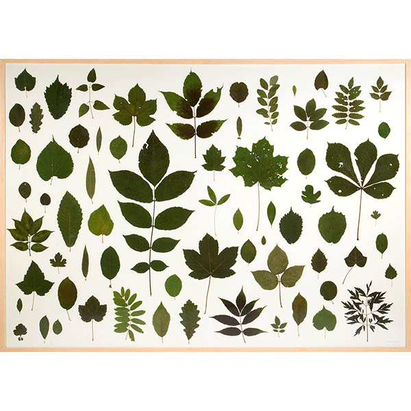 herman de vries<br/>blätter aus dem nördlichen steigerwald, 2015/2016, dried and preserved leaves, 103 x 143 cm