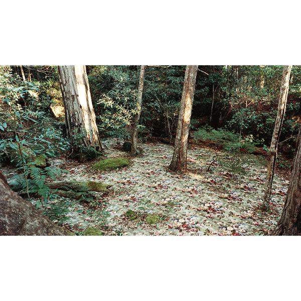 ROSEMARY LAING<br/>groundspeed #17 L, c-print, 2001, 110 x 195 cm, framed, ed. 15