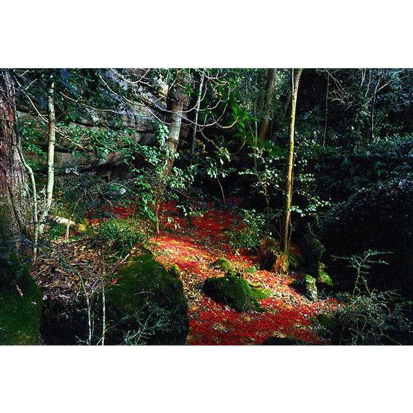 ROSEMARY LAING<br/>groundspeed #03, c-print mounted, 2001, 85 x 128cm, ed. 15