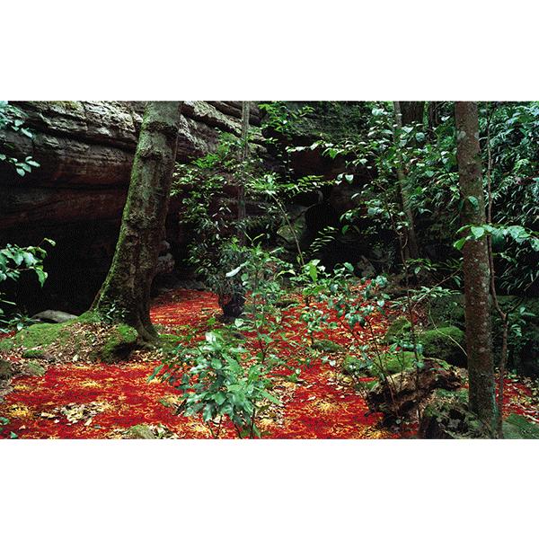 ROSEMARY LAING<br/>groundspeed #05, c-print framed, 2001, 94 x 136 cm, ed. 15