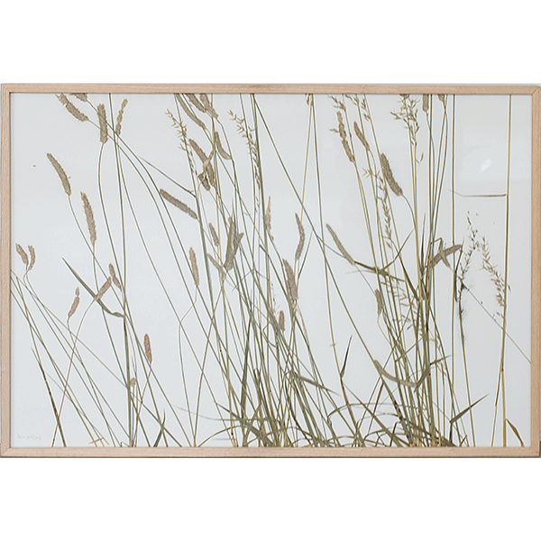 herman de vries<br/>Rasenschnitt, 2009, preserved plants on paper, 52x72cm