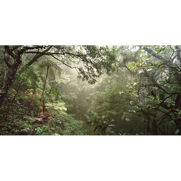 ROSEMARY LAING<br/>weather 14 L (Paradise falls), 2006 / 07, c-print, 124 x 236 cm, ed. 8