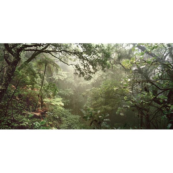 ROSEMARY LAING<br/>weather 14 L (Paradise falls), 2006 / 07, c-print, 124 x 236 cm, ed. 8