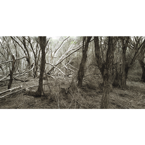 ROSEMARY LAING<br/>weather 02 small, 2006, c-print, 80 x 140 cm, framed, ed. 6